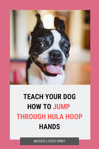 trick-training-teach-dog-jump-through-hula-hoop-hands
