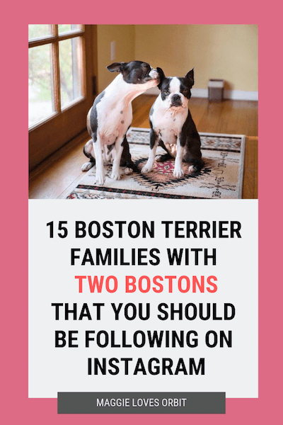 15-boston-terrier-families-Instagram