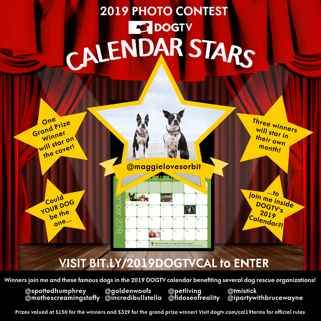 Enter DOGTV's Photo Contest and join us to be part of the 2019 Calendar.  For every calendar sold $10 will be donated to the rescue you support.