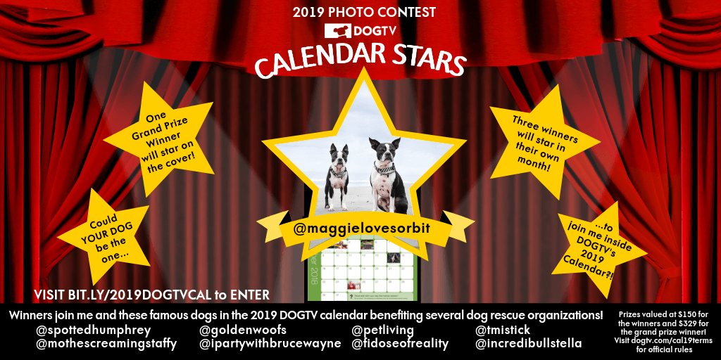 Enter DOGTV's 2019 Photo Contest to be part of the Calendar