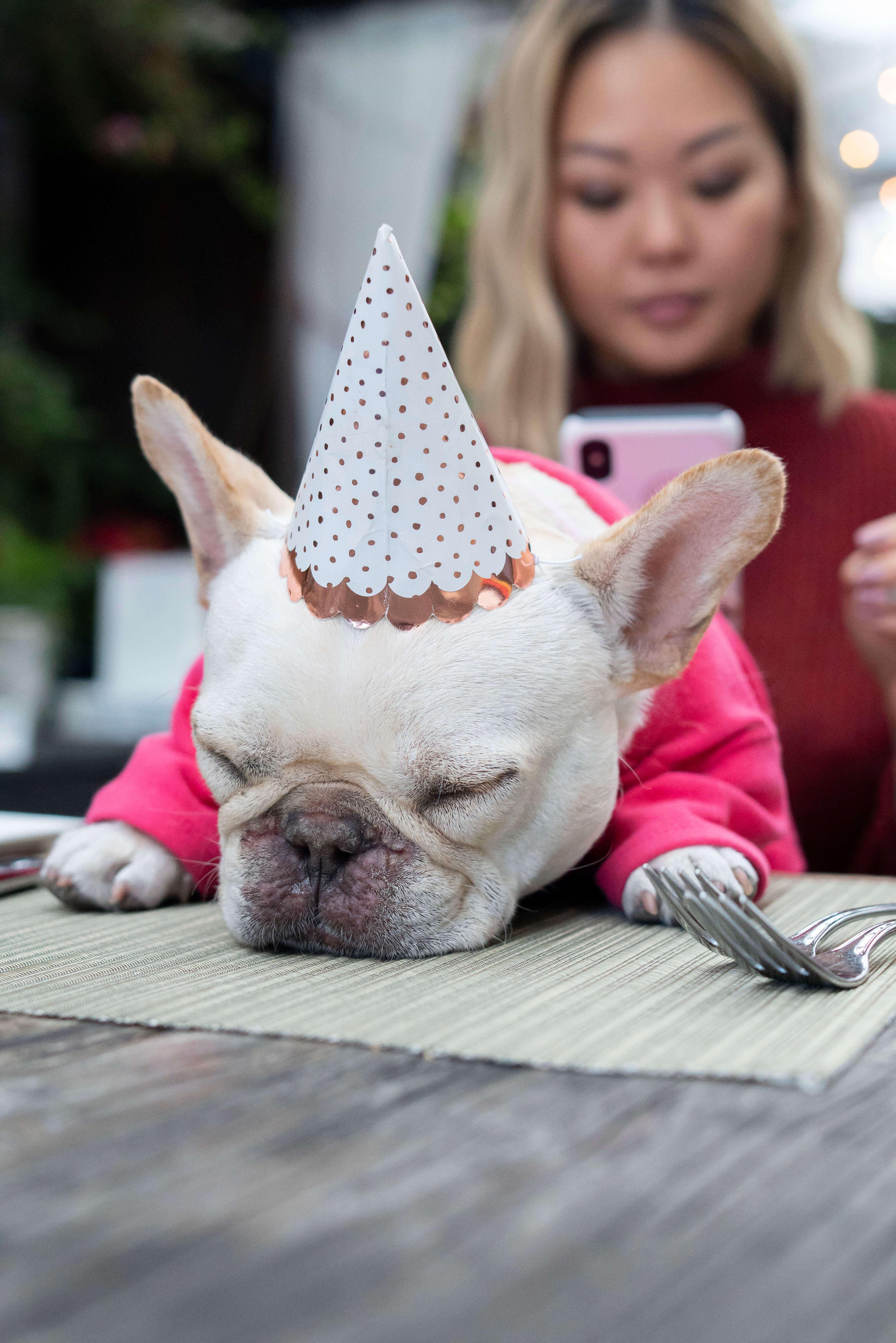 dog-birthday-inspiration