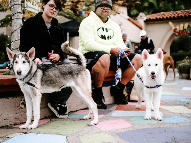 Dogs at Balboa Park Pack Walk