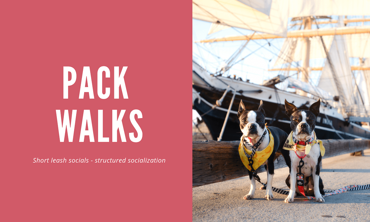 Pack Walks in San Diego