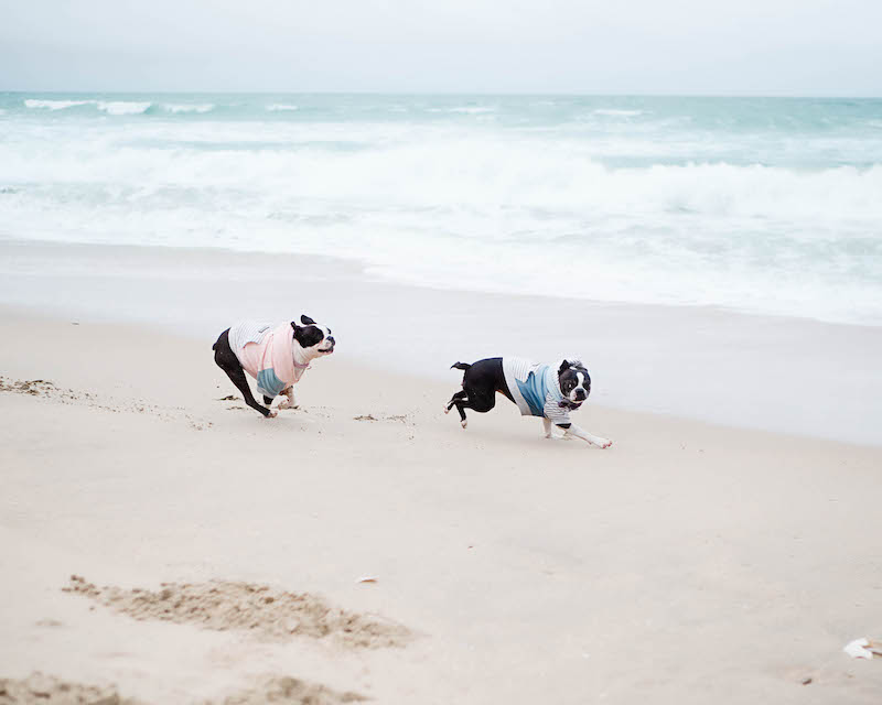 two dogs running on beach near pasea hotel