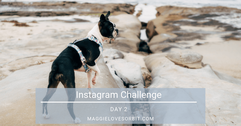 Instagram Challenge Day 2