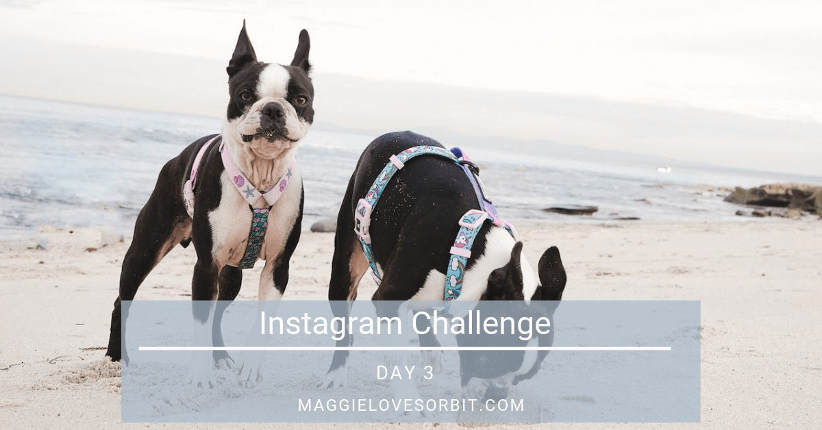 Instagram Challenge Day 3