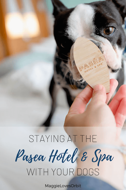 pasea hotel dog friendly