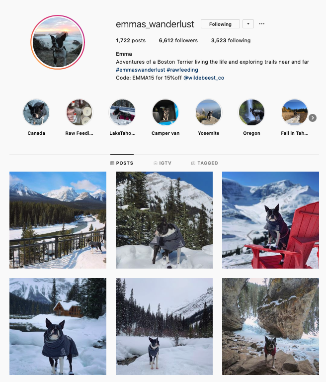 Instagram bio of an adventure dog