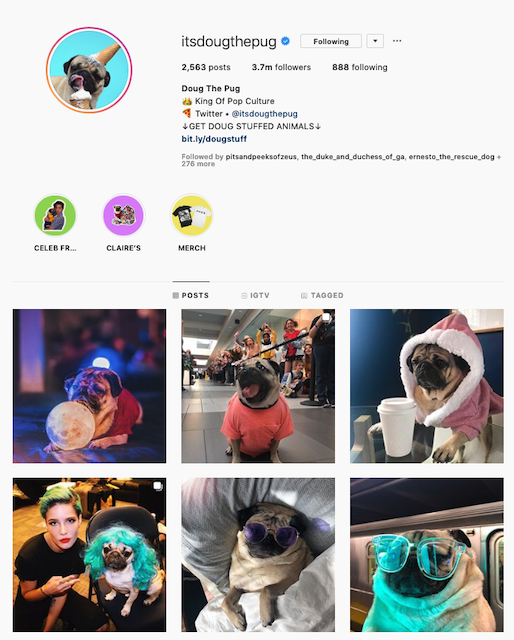 Instagram Bio of ItsDougThePug