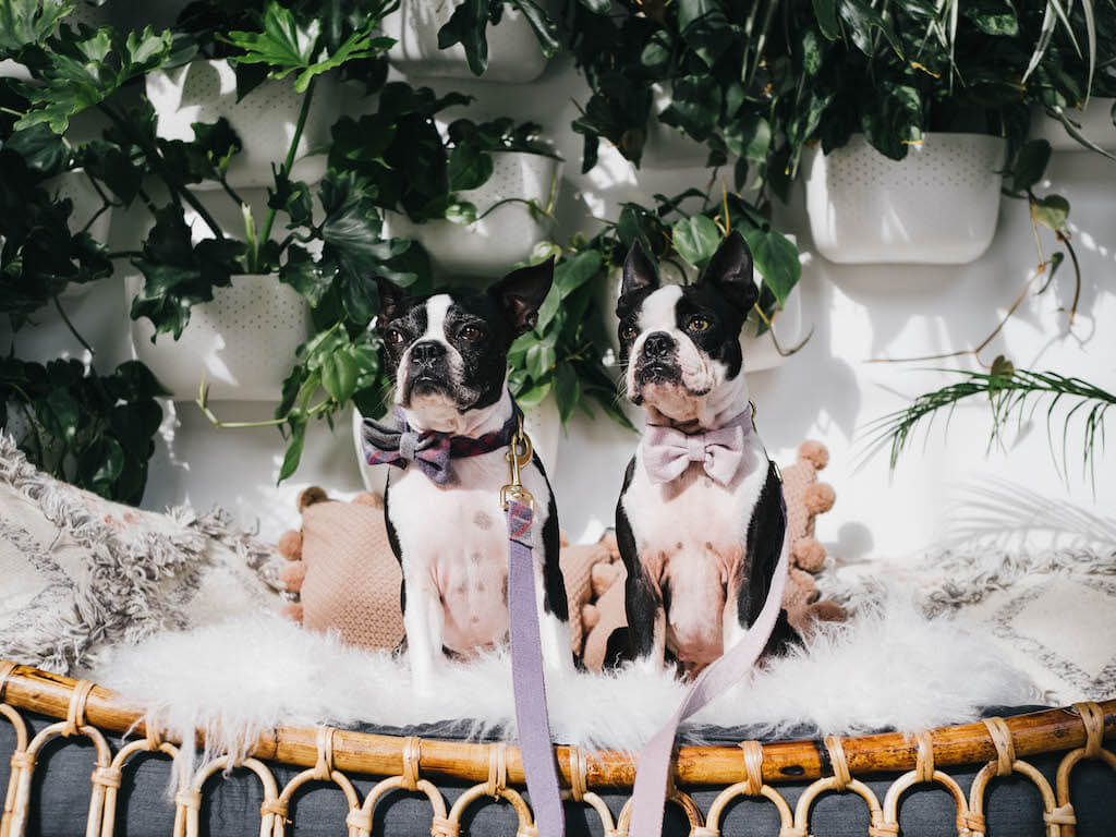 2019 Dog Hashtags for Instagram  | 1320 Epic Hashtags to Get more Likes