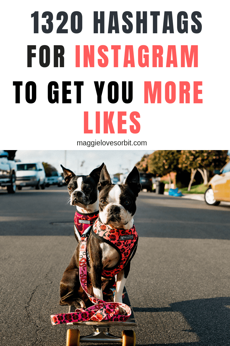 2019 dog hashtags to use on Instagram - list of 1320 hashtags