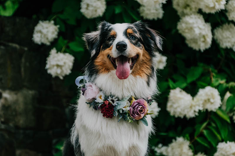 7 Reasons Why Your Dog or Cat Needs a Handmade Boho Flower Crown