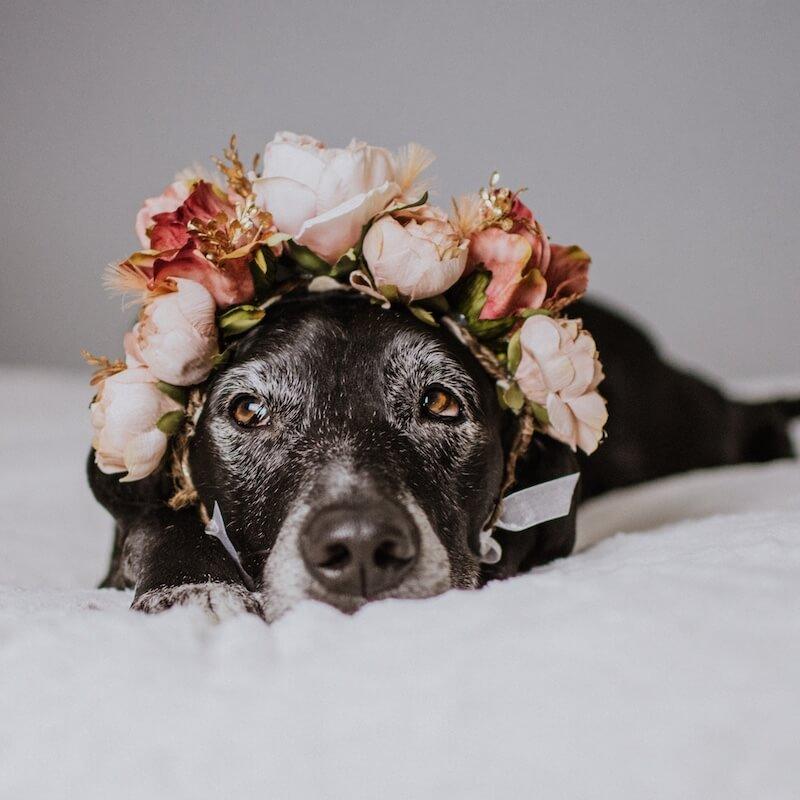 senior-dog-wearing-flower-crown