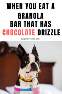 Pinterest image for when your dog eats a granola bar that has chocolate drizzle