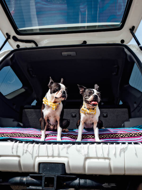 Are toyota 4runners a good car for dogs?