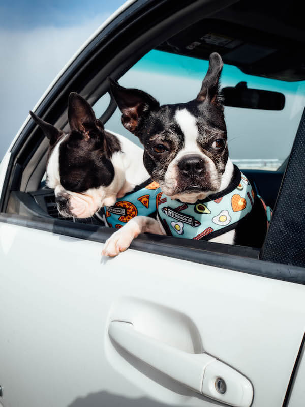 Is the toyota 4runners a good car for dogs?