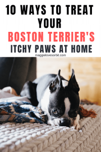 10 Ways To Treat Your Boston Terrier's Itchy Paws at Home