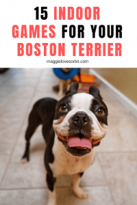 What Indoor Games Can I Play to Keep my Boston Terrier Busy?