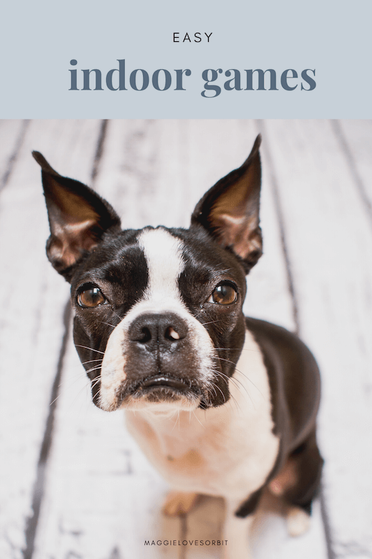 what-games-can-I-play-with-boston-terrier-dog-indoors