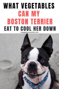 What Vegetables Can My Boston Terrier Eat To Cool Her Down?