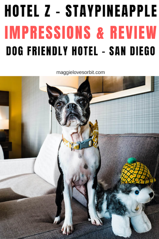 Hotel Z Staypineapple Dog Friendly Review