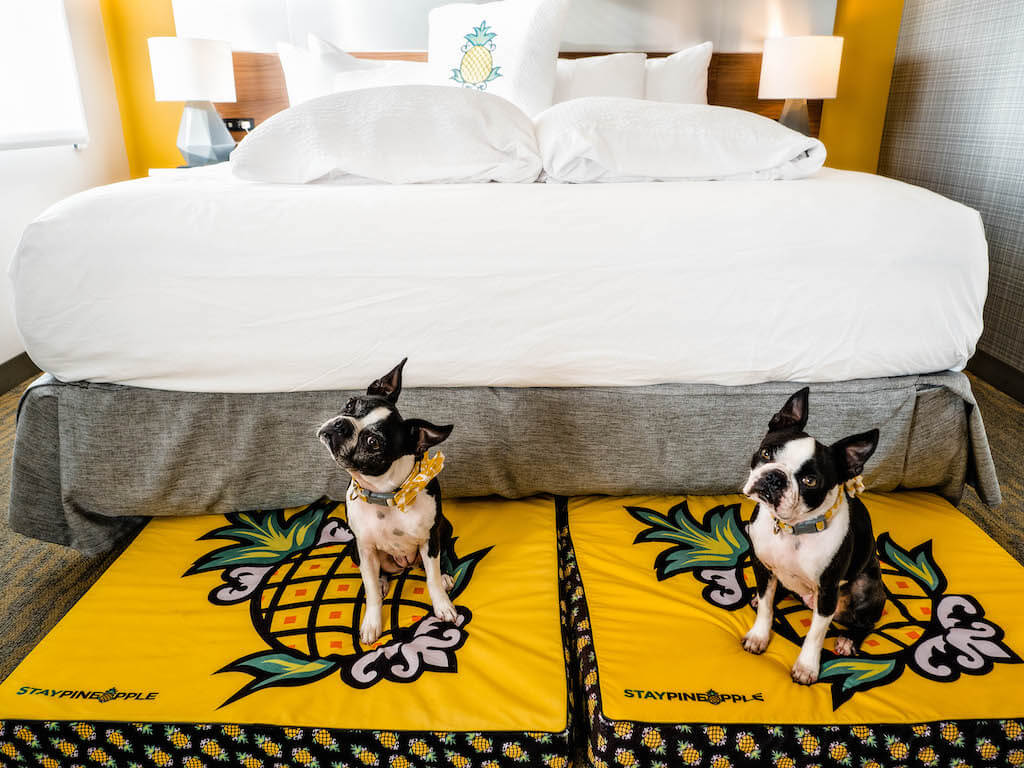 Hotel Z:  San Diego's most dog friendly hotel.  Impressions and Review