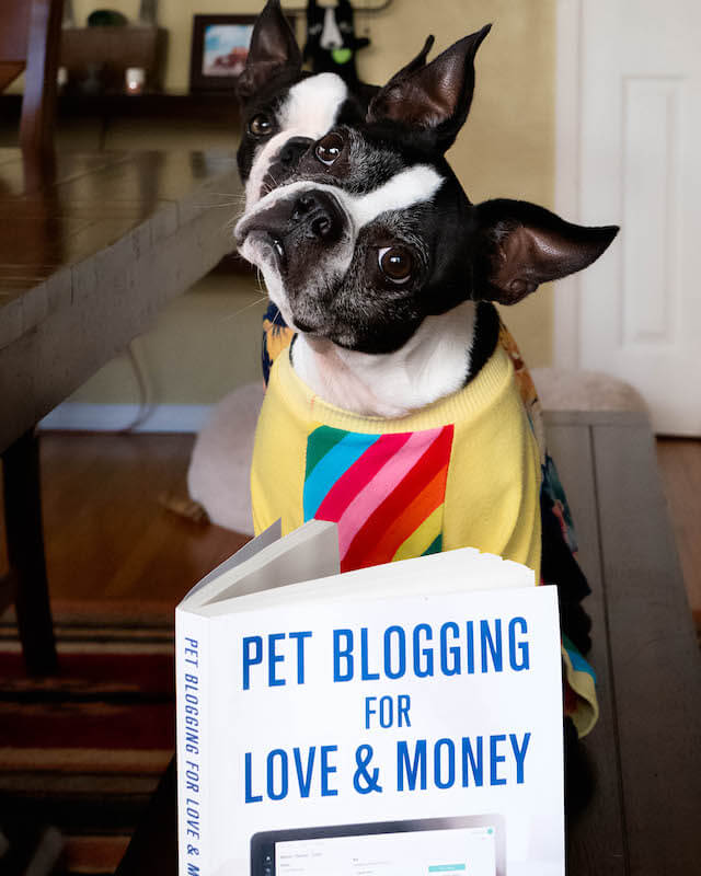 two instagram dog influencers explain why you need a blog