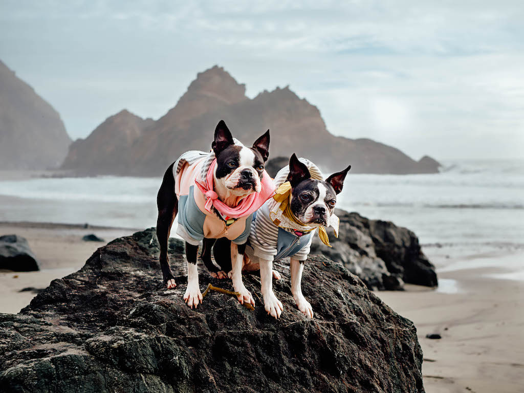 Tips For Camping With Four Dogs at Kirk Creek Campground, Big Sur