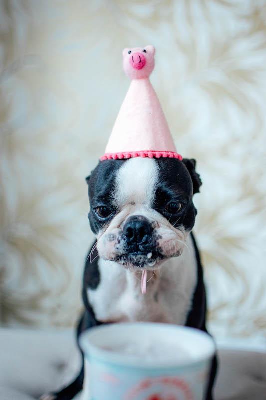swell-gelato-barkday-dog-gelato