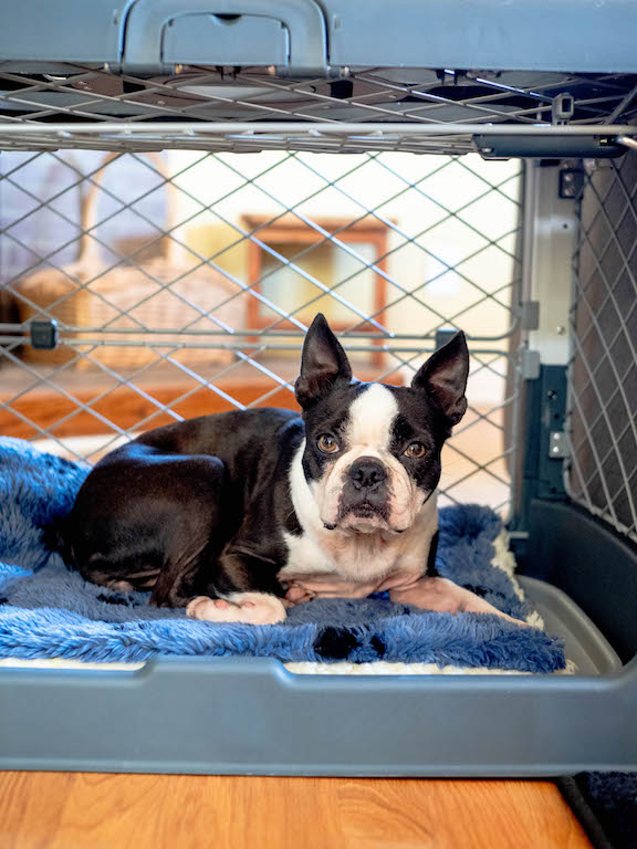 diggs-revol-dog-crate-review