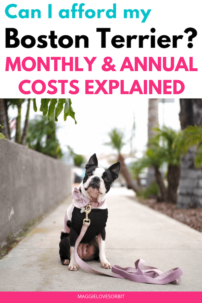 how-much-does-boston-terrier-cost-monthly-and-annually