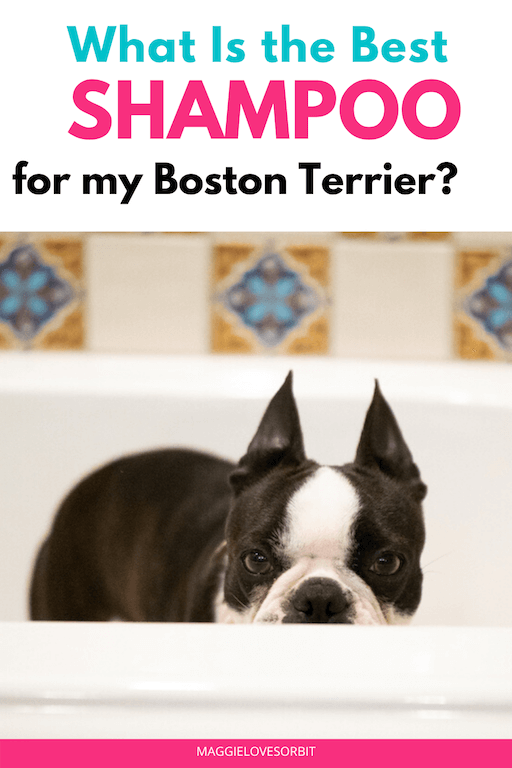 Best Shampoo for Boston Terriers