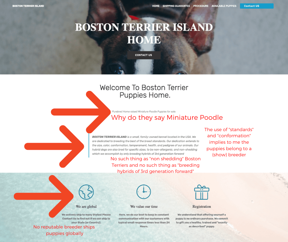 boston-terrier-breeder-near-me-scam