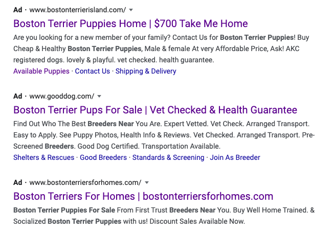 paid-ads-for-boston-terrier-breeders-near-me