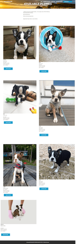 """Don't get scammed by a """"Boston Terrier Breeder Near Me"""""""