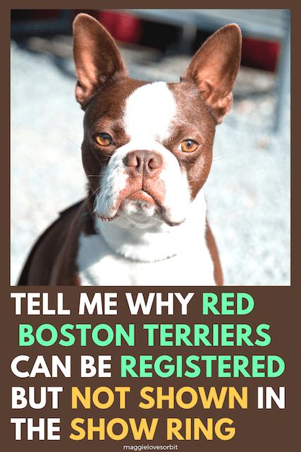 Boston Terrier Colors Explained