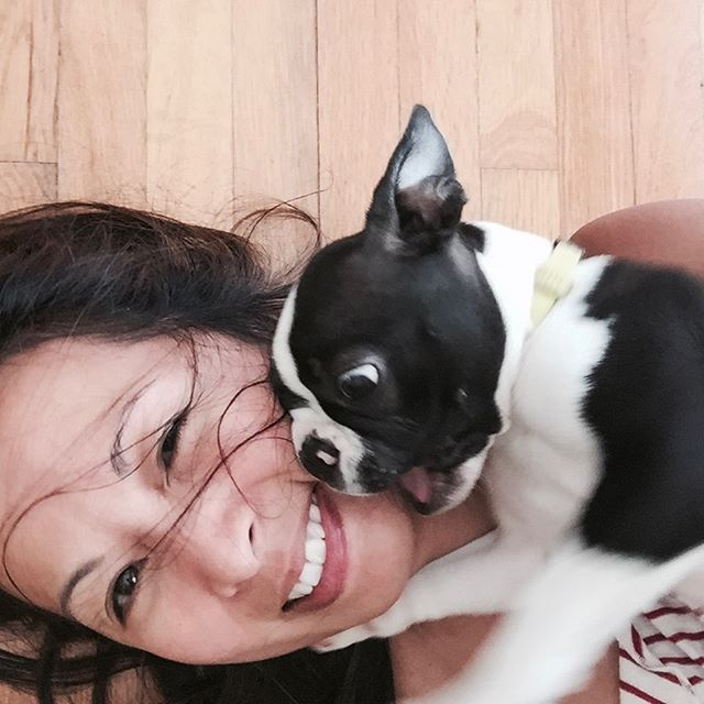 10 Reasons Why Your Boston Terrier Loves To Lick You