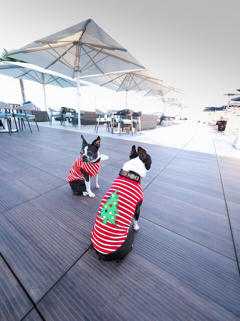 Christmas Tree Striped Red And White Tee For Boston Terrier-2