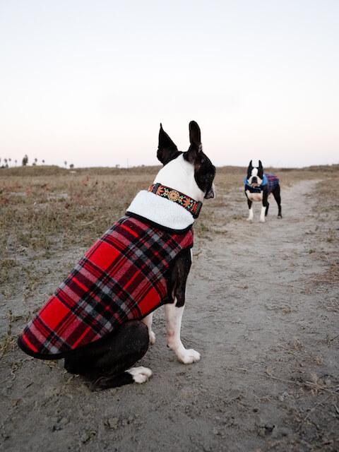 best alpine sherpa dog jacket for a boston terrier