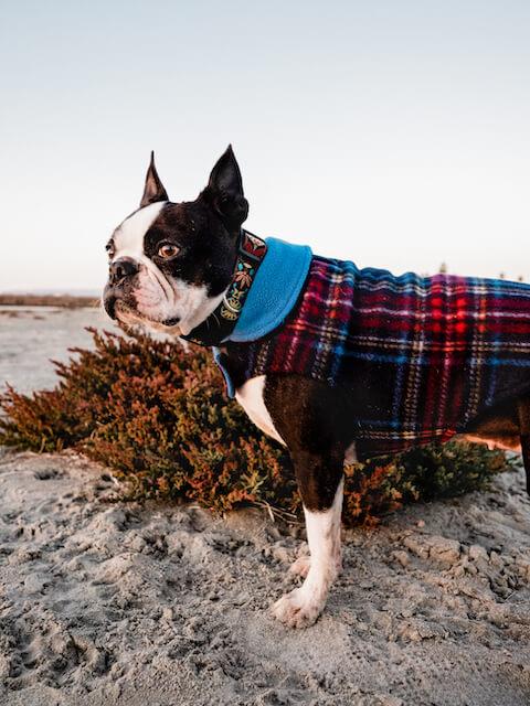 best reversible fleece dog jacket for a boston terrier