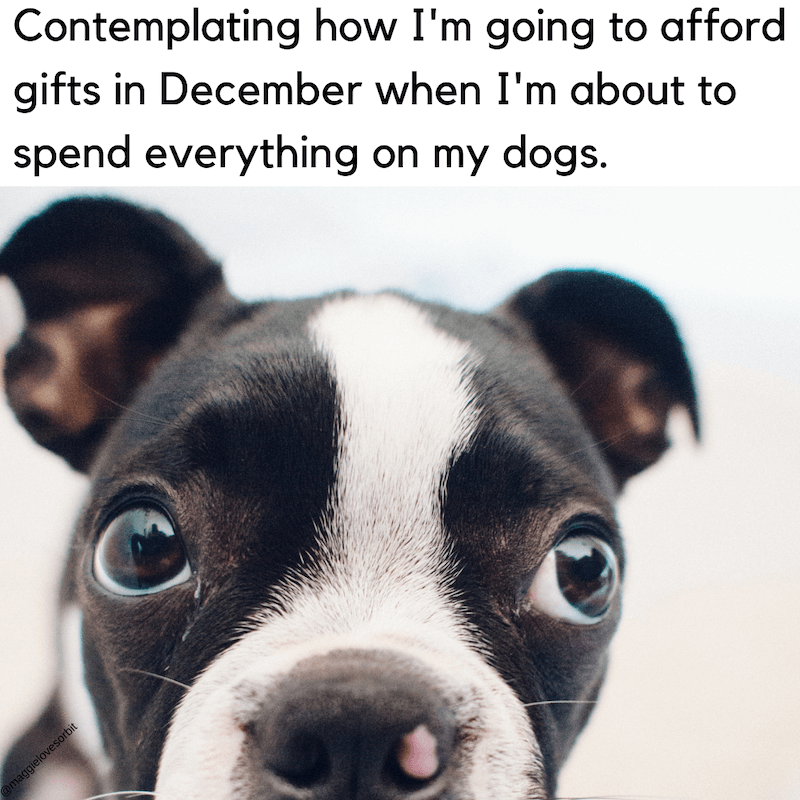 black friday dog meme