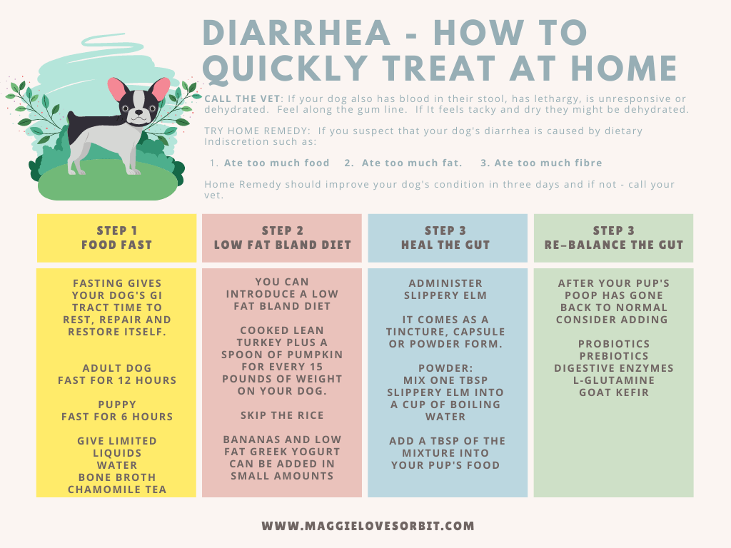 a table showing the four ways to quickly treat diarrhea in dogs at home