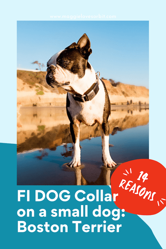 does the fi dog collar fit small dogs (1)