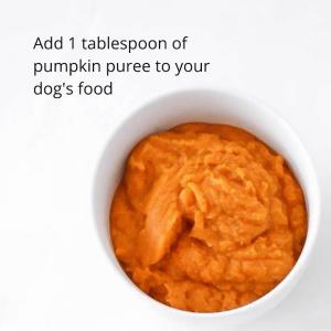 pumpkin puree for diarrhea in dogs (1)