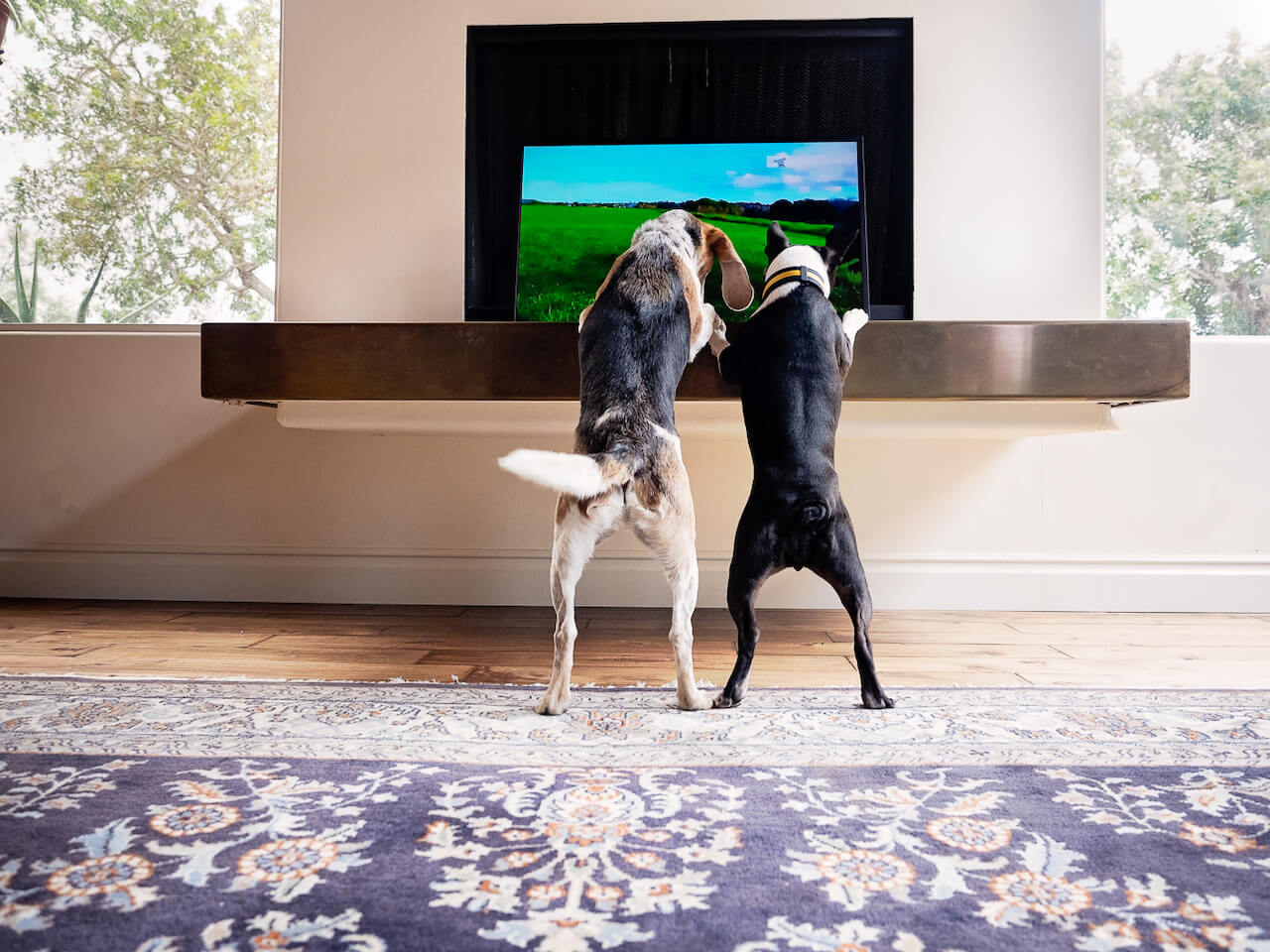 9 Things You Didn't Know About DOGTV