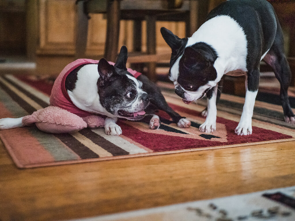 14 Simple and Natural Tips To Help Your Dog Be Less Itchy In the Summer