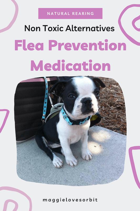 Less Toxic Alternatives to Flea Prevention Medication