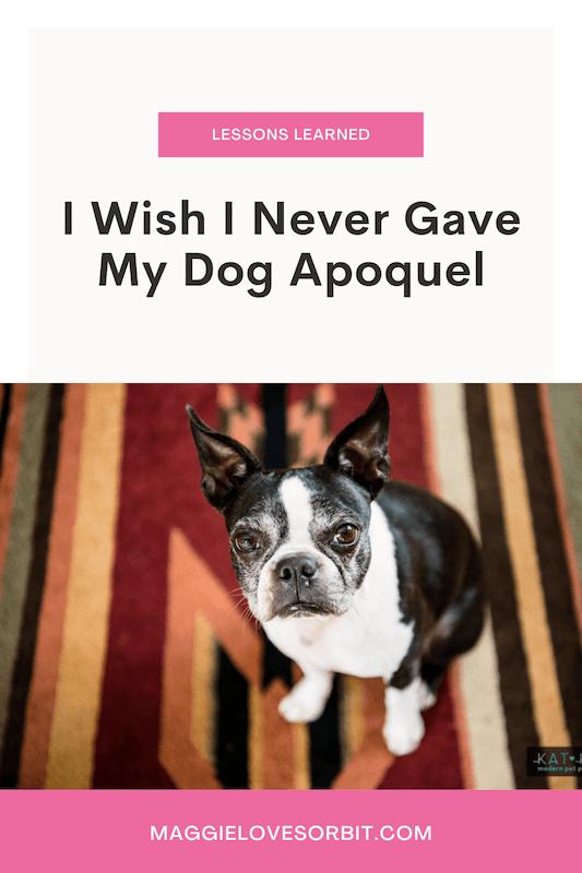 I Wish I Never Gave Apoquel To My Dog